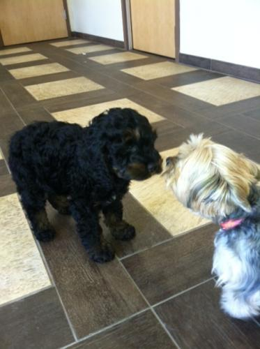 Murphy meets Sophie at his check up